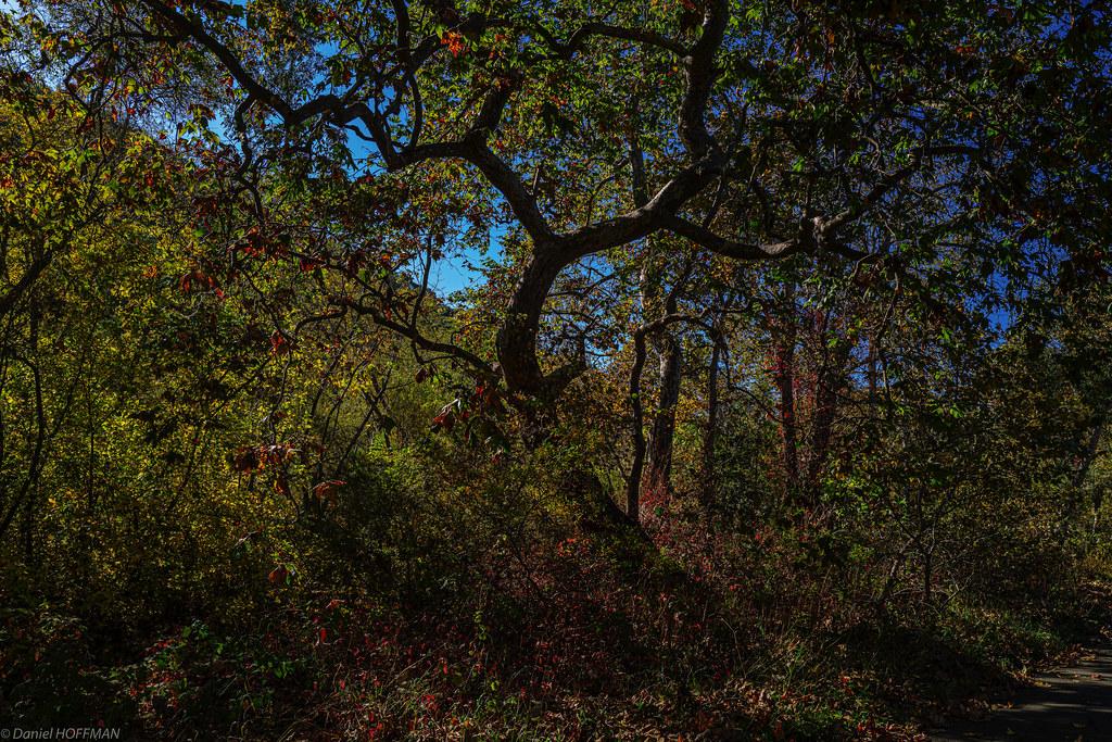 Bob Jones Trail foliage.
