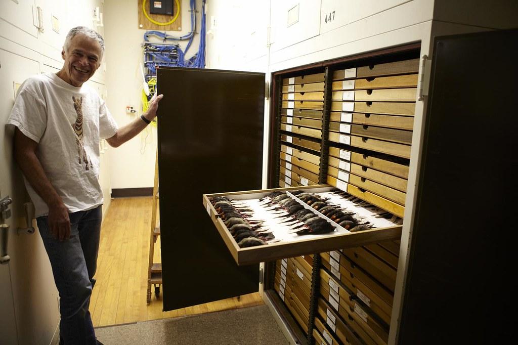 威拉德表示,退休後還要繼續測量鳥類直到再也量不動。圖片來源:(c) Field Museum, Greg Mercer