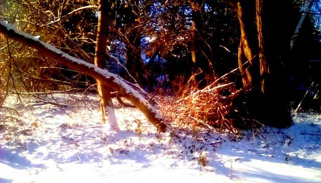 Backyard snow! Menominee Michigan