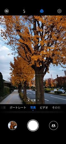 「AIカメラ」は黄葉と紅葉を区別できない