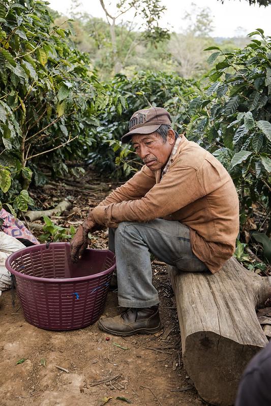 Kinh tế cà phê; Nghịch lý và Bất ổn