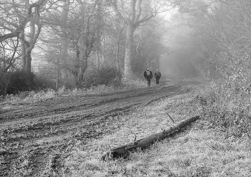 A walk in the mud, mist and frost