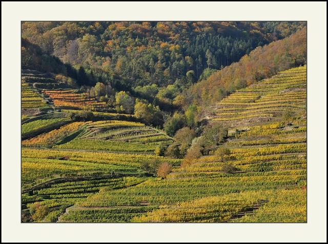 Wachau - Weingärten bei Weißenkirchen