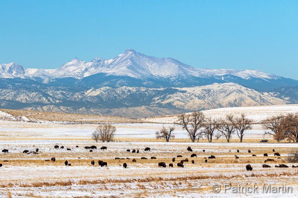 Where the buffalo roam. December 1, 2019. (Patrick Martin)