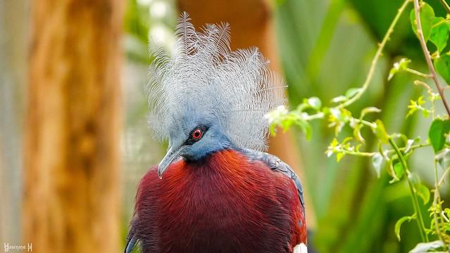 #Bird - 7838