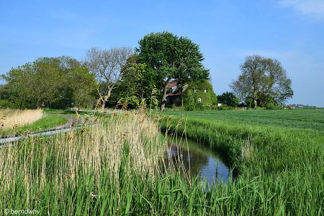 Hofstelle bei Hohenkirchen-Gottels / Landkreis Friesland