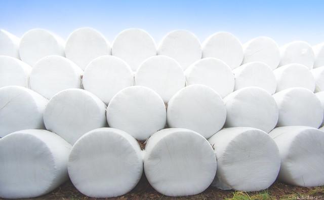 Weiss verpackte Heuballen /  Wrapped Round Hay Bales