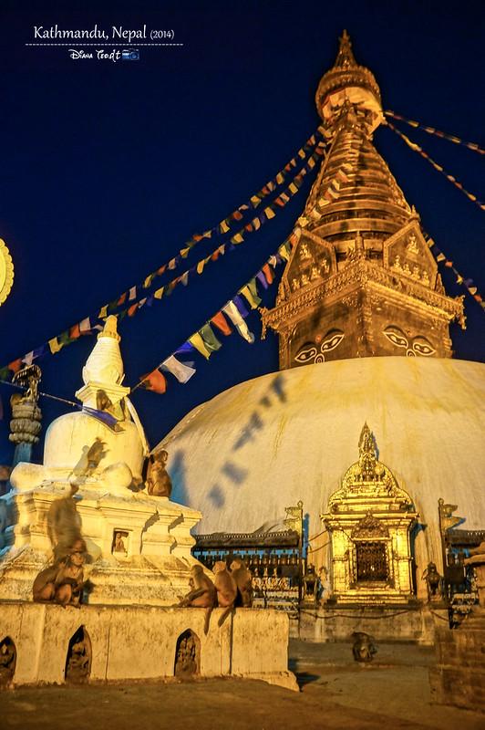 2014 Nepal Kathmandu Swayambhunath Temple Monkey 2