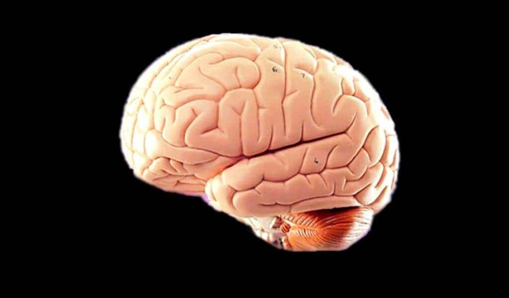 Des médicaments expérimentaux contre l'Alzheimer