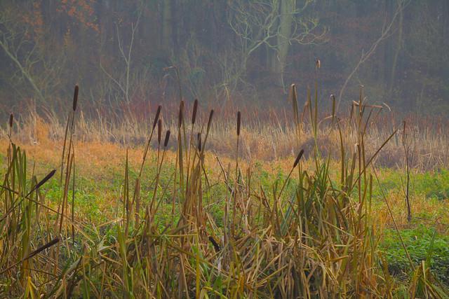 Misty Woodland Walks..