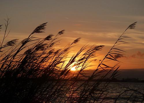 sunset lakecharles louisiana seaoats lake travel