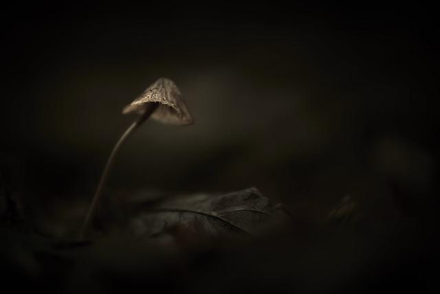 Dark Painting