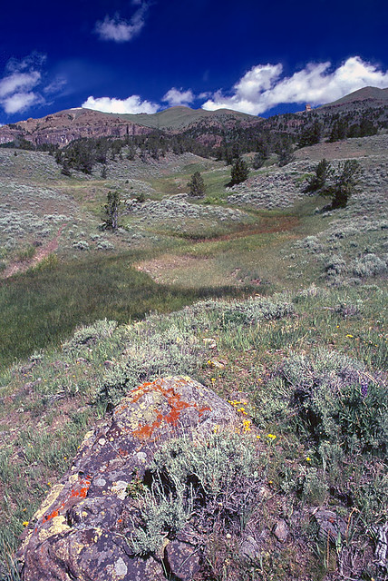 Toward Carter Mountain from near Piney Creek. Washakie Wilderness