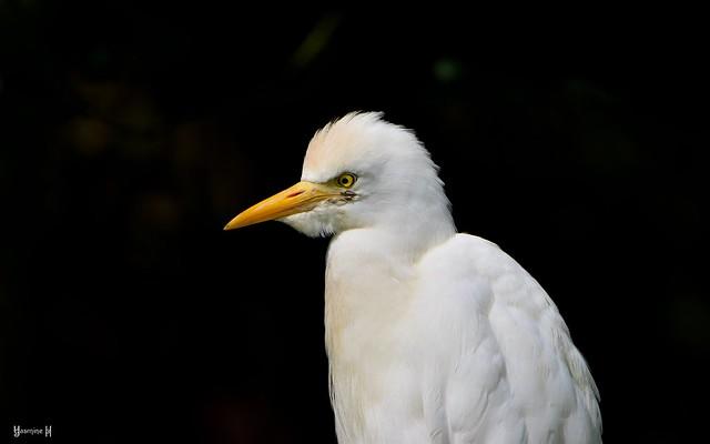 White Bird - 7840