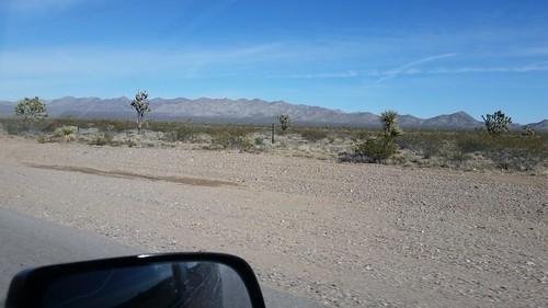 Joshua Trees and Yucca Plants