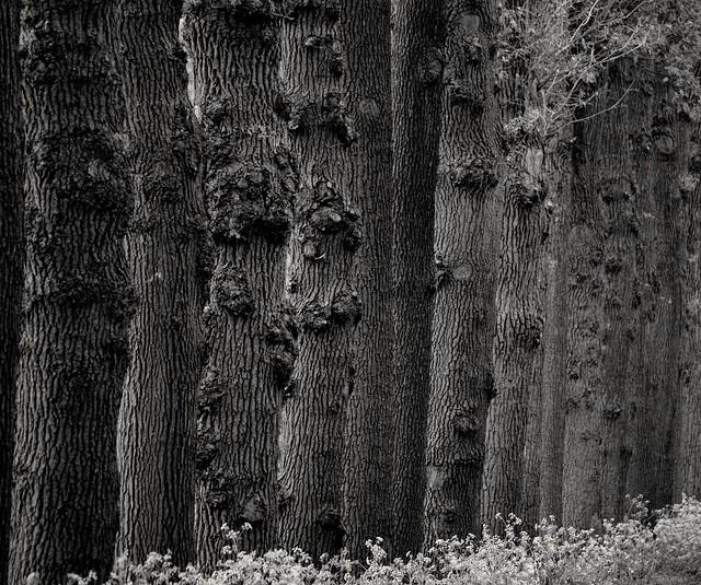 Wood, Twente, the Netherlands