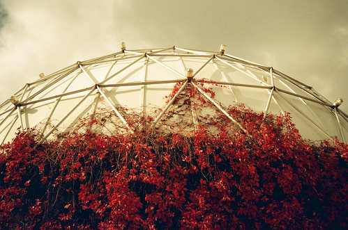 dome and vines