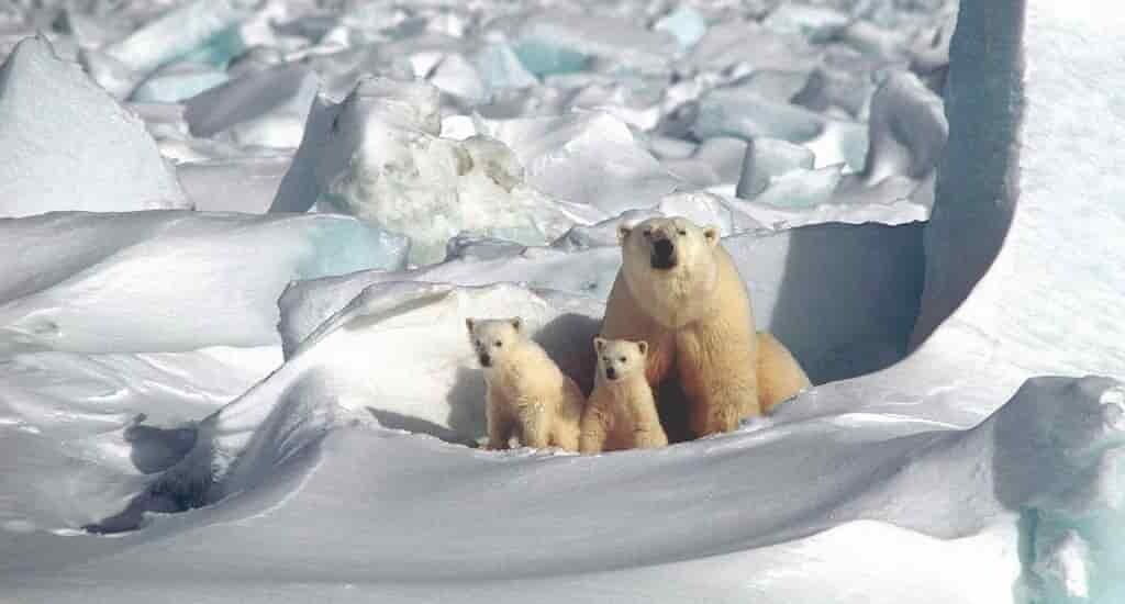 La glace de mer arctique disparaît plus vite que prévue