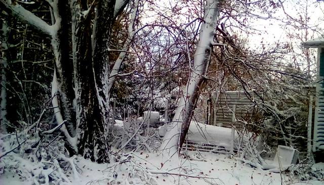 Snow covered trees - TMT Menominee Michigan