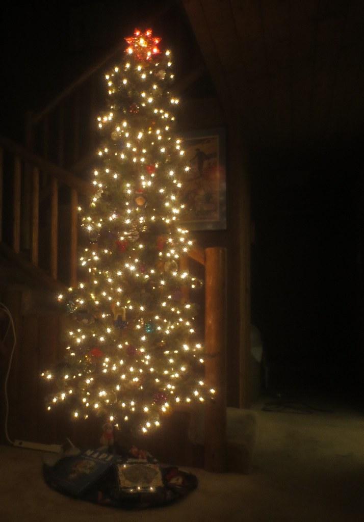 Christmas tree, 2019