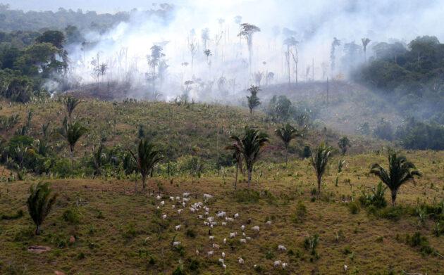 今年夏天的亞馬遜大火引發了全球性的警報。照片來源:英國非營利組織新聞調查局