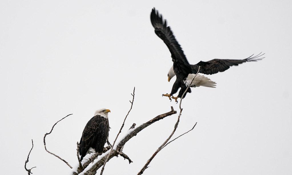 Eagle landing 2 (1 of 1)