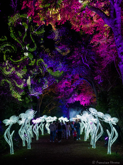 NightGarden at Fairchild