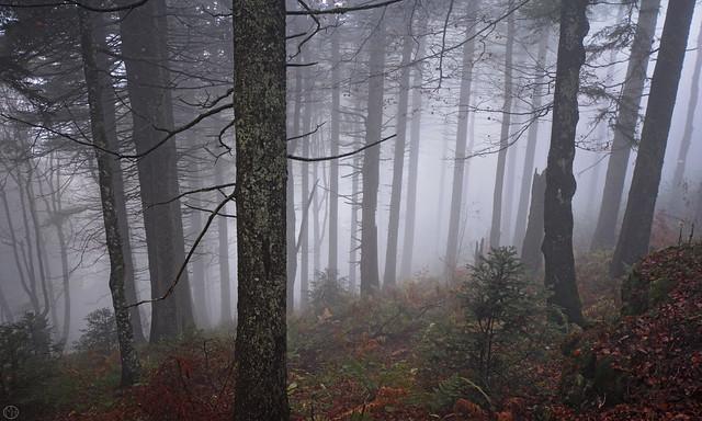 down the foggy forest  Schauinsland 2019