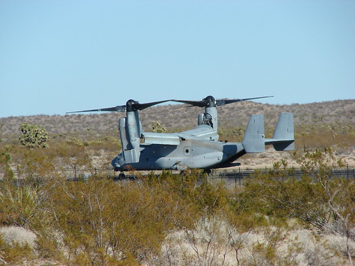 Osprey at Searchlight NV