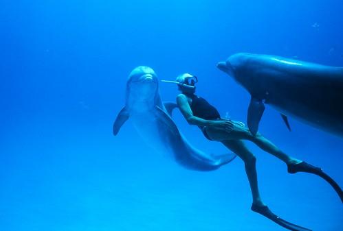 映画『ドルフィン・マン~ジャック・マイヨール、蒼く深い海へ』より