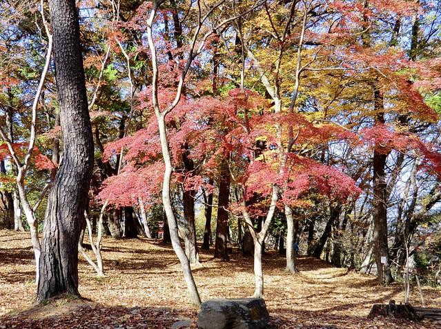 月の石もみじ公園-4 Tsukino-ishi-Momiji Park