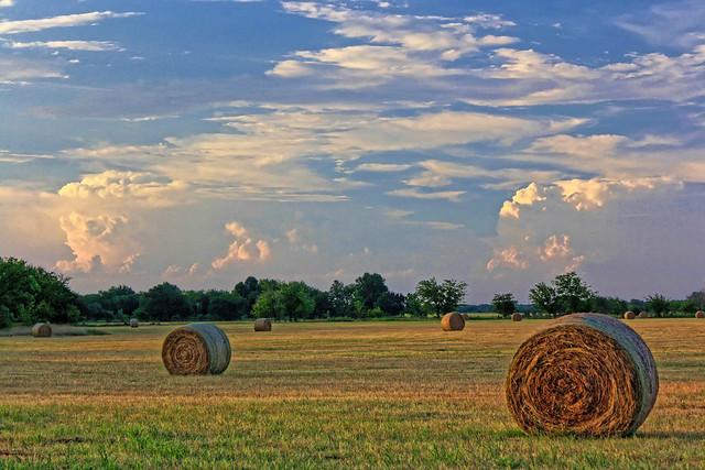 summer hay in Oklahoma