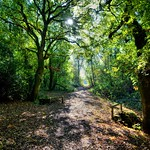 Woodlands walk in Penwortham