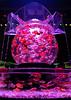 Art Aquarium by Mutchi627