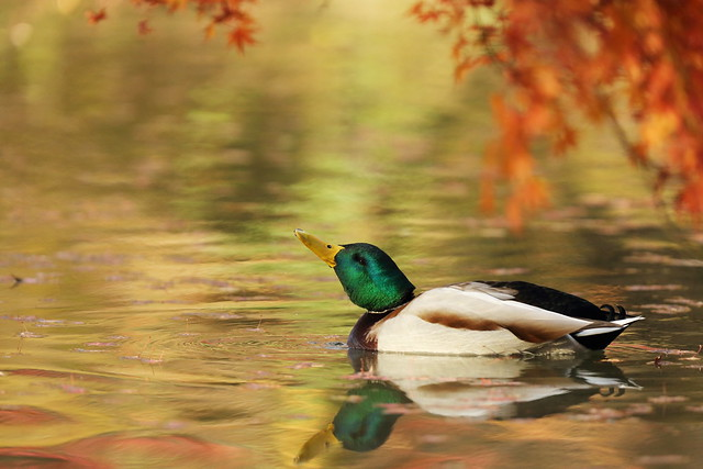 Playing in the autumn pond