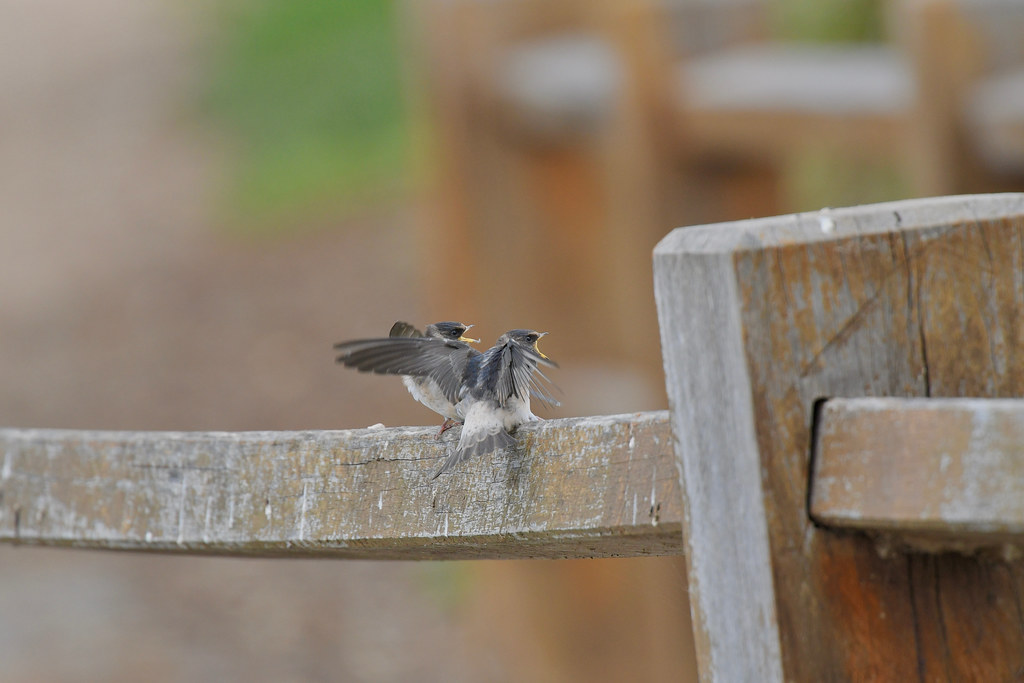 Young Tree Martins ( its a waiting game )