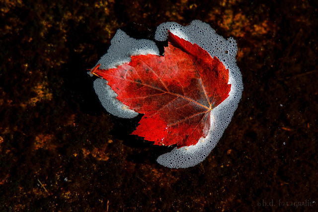 only a leaf