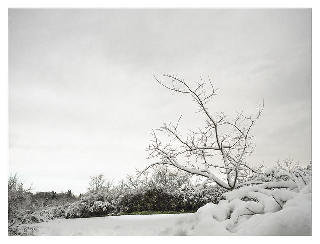 nella neve che tutto imbianca