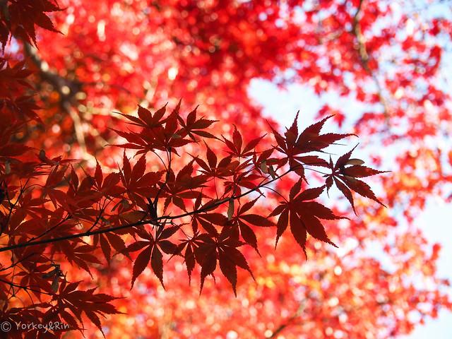 2019 Autumn leaves #7