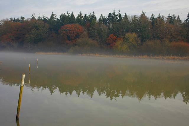 Warnham Local Nature Reserve