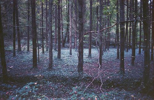 Autumn forest / 03