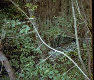 Autumn forest / 02