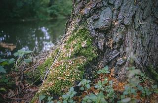 Autumn forest / 01