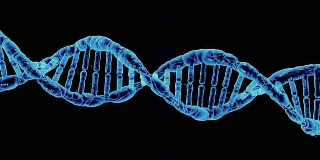 Scanner l'ADN avec l'IA pour déterminer l'espérance de vie