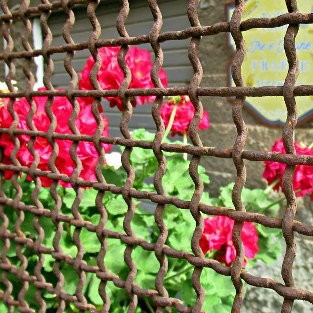 Fleurs sauvages incarcérées. Durée de peine indéterminée.
