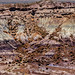 Petrified Forest National Park-2097