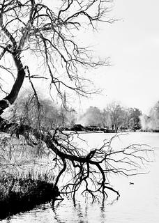 River Avon scene