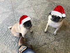Waiting for Santa :santa: :christmas_tree:
