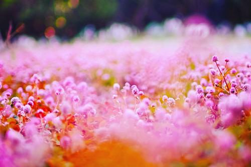 flowers garden pink cute sigma sdquattro bokeh