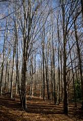 Fageda / Beech forest